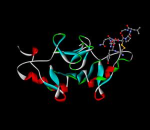 Oxytocin-image